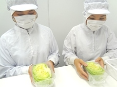 東松島市大塩字引沢/野菜のカット、包装など/週払いOK